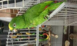 I'm looking to buy an Amazon parrot, must be hand tame and talk a bit. .call me or text if you have one. I currently own an african grey.and looking to add another bird tonthe family. .will pay reasonable price call or text 414-333-1955