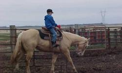 Birdee is very friendly and doing GREAT at the trainers and would make a good 4-H project or all around riding horse. The trainer is very impressed with her she is calm and learning daily. She would also raise some pretty colts. She is halter broke, ties,
