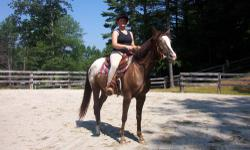 Appaloosa - Bailey - Medium - Adult - Female - Horse 15h., DOB 4-2006 Bailey is a liver appaloosa with a beautiful blanket. She has a white eye, a blaze down her face and one white sock. Her sweet personality will melt your heart. She has good ground