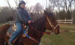 Gunner is a approx. 9 year old gelding quarter horse with a awesome personality he is approx. 14.3 hands my son is 13 and has owned him now since Gunner was 5 years old he will make a good English horse and he responds well to leg he does not like him