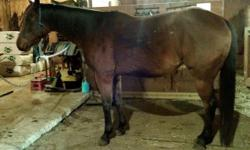 """Slow Lopin Rodeo """"Faith"""" 2007 AQHA/79% NFQHA Bay Mare Faith is sired by AQHA Champion, Lopin Slow. She is 15.2 hands and has excellent conformation. Very smart and willing, she loves to work and is considered green broke to ride. She is very solid under"""