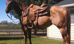 AQHA 2004 RED DUN MARE REG: DASHINGLY DOC REG#4634001 DOB:5/04 SIRE: CASH FOR ROYALTY DAM: DOCS CACTUS CUTIE GRANDDAUGHTER OF DASH FOR CASH GOES BACK TO DOC/CASH/BAR BREEDING VERY WELL BREED MARE SHE IS A ALL AROUND NICE MARE :NOT MARISH: AT ALL! SHE IS