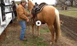 2013 AQHA BC Playguns Pearl is a well minded, well mannered filly. She has been saddled many times and has about 10 rides on her without issue. She loads/hauls well, good with feet, baths and clips. This girls has cutting champions all over her papers.