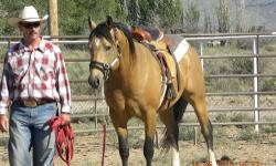 ~*GLOVE*~ A 2004 Stallion. A very sweet boy who loves to be handled. He hadn't been bred but I have had him out with my Palomino mare this last week. He has been a perfect gentleman. He was ridden twice a week for a 2 years up until last year in July due