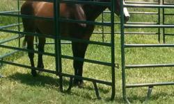 AQHA line back dun mare. Utd on equine shots and neg coggins. Stands 15.3 stands for farrier. Needs experienced rider. Loves attention. Easy keeper. Lead, loads and ties in trailer . Very stout mare