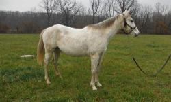 Zans Memorialjackpot is a 5 year old gelding I have for sale. He has been trail rode at Forbes and around the trails here close to the house. He will ride with the group or off by himself. He still needs some work to consider him a finished broke horse.