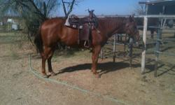 Dash is a , 7 yr old, 15.1 hh, SUPER GENTLE, LEVEL HEADED gelding with a great handle. This guy is one heck of a horse! His previous owner's used him to rope and do ranch work. He has done a bit of everything, but has most recently been a trail horse. He