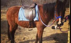 Comes with saddle lead rope, she's trained for riding, great with kids, I'm asking $800.00 OBO This ad was posted with the eBay Classifieds mobile app.