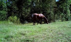17 yr old bay mare, 14.2-3 hands. Suitable for pasture mate, light riding or leading kids around. Leads , loads, ties....stands for saddle, bridle, farrier, vet. No kick, buck,bite, rear and easy to catch. Been pastured with goats, alpacas,pigs, sheep,