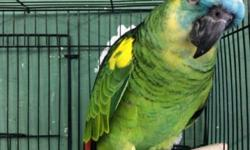 Arrieros Pet Shop has a variety of Exotic Birds... We also carry food, cages, toys for your bird to keep them happy and plenty more items.. Come visit us and our staff will be glad to help you find the right bird for you. 2550 Imperial Ave San Diego, Ca