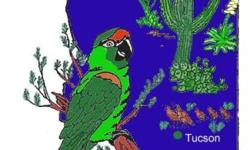 The Avicultural Society of Tucson is proud to present the largest bird expo in Southern Arizona. The event features local and regional vendors including breeders with birds for sale and sellers of bird supplies. There will also be raffles and free help