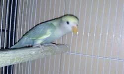I have some baby love birds and hand tamed $80 and up