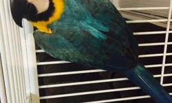 Hello , I have my baby blue & gold macaw very nice bird, really friendly with everybody at home including my 3 kids , he or she don't bite at all , he likes to eat a lot fruit and vegetables also feeding zupreemme macaw food , it comes with a nice and new