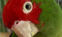Im looking for greencheek conure babies out of the nest to handfeed, Im a experienced handfeeder. email with your price and location. thanks
