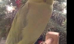 We are looking for a baby Meyers parrot. Willing to pay reasnable price. Please call/ text 916-502-0811 Thank you.