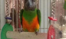 dna female hand fed tame ,$800 no cage