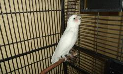 is an adorable and very smart bare eyed cockatoo male with only one year talker and dancer entire word says and laughs all the time is very special I have to move from where I am and I can take with me just ask you to be serious buyers and are willing to