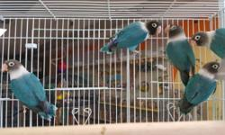 CALIFORNIA'S PREMIER WHOLESALE EXOTIC BIRD EXPO! Tons of Birds, Toys, Cages, Seeds & so much more at discounted prices! Purchase directly from reputable breeders and manufacturer in the industry. Sunday August 14, 2016 Santa Clara Fairgrounds 344 Tully