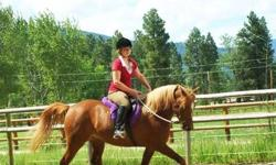 I have a beautiful Arabian mare for sale. Cinnamon just turned 10 in April and has a gorgeous chestnut and flaxen mane and tail. I've owned her since she was 6 months old and she's a great girl. She is technically registered as a half-Arabian, but she is