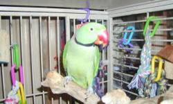 Re-homing 5 year old beautiful Alexandrine Parrot, His name is Baby, with work can become friendly, trained to come out of cage on perch. Likes to make sounds.Rings like a phone and barks like a small dog. He loves fresh fruits, veggies, mixed seed,