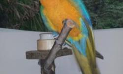 Beautiful catalina macaw Have a nice and friendly macaw parrot Very sweet and tamed. For more information please contact And will get back to you asap.