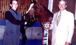 Shahnel No Five (Bey Shahn (Bey Shah) x Chal Rena (Back Street x Mitee Daughter (Bask) 2001 Chestnut mare. 2002 Iowa Gold Star Futurity Auction class champion. Has produced one Gold Star Auction class champion, and one that was sold to South America. She