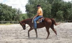 Running With The Wind AKA as Joe He is a APHA Stallion real gentle.Rides and no vices. All his off springs have been Black & white or Buckskin and white. We are selling our last two horses no longer ride. He would make a great Christmas Present. Real