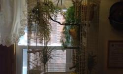 Beautiful Finch cage with 6 society finches. Cage comes with Base. This ad was posted with the eBay Classifieds mobile app.
