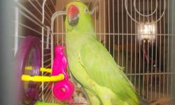 Beautiful Indian Ringneck Parakeet. She is full feathered. Pretty quiet bird. I just don't have enough time to give her. If interested please call 717-242-5955