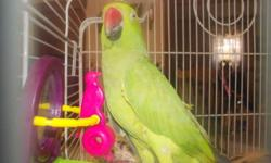 Beautiful Indian Ringneck Very quiet bird I just don't have enough time for her. If interested please call 717-242-5955