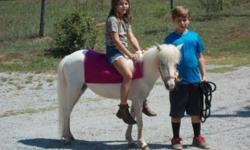 RIDING PONIES Snowflake 5 year old mare very gentle and sweet with a beautiful blue eye. She likes to bathe picks all her feet up she rides alone or lead line. Velvet 5 year old mare that is also very gentle and easy to handle. She picks all of her feet