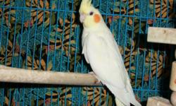 She is a very sweet and loving bird. She likes toys!! She is handfed. She is very calm. She is a very sweet bird. She is not real noisy. Is use to other animals and kids. She does not come with cage. she is holdable does not bite! If you have any