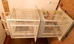 New clean white bird cage or travel cage for any size bird! tray for easy cleaning and 2 cups...25.00