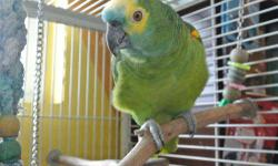 BIRD EXPO MELBOURNE, FL February 3, 2013 9 am ? 4 pm Azan Shrines Center 1591 Eau Gallie Blvd Admission $5.00 Kids 12 and under free For more information check out www.iandmaviary.com [email removed] Veterans always free with veterans ID Door prizes,
