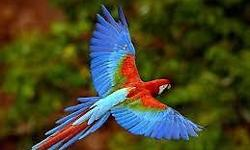 VISIT US AT THE SOUTHEAST EXOTIC BIRD FAIR ON MARCH 7TH & 8TH . AT THE GA STATE FARMERS MARKET EXHIBIT HALL #29. SHOW HOURS SAT & SUN 9AM -4PM. ADMISSION IS $3.00 KIDS 16 & UNDER ARE FREE! THERE WILL BE EXOTIC BIRDS FROM FINCHES TO MACAWS!! AND EVERY TYPE