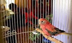 Arrieros Pet Shop has everything for your birds needs...with a great selection of Exotic Birds at great prices...We are your one stop shop for all your bird needs cages, nest box, seeds and many more... we carry 50 lbs sack finch, parakeets, cockatiels,
