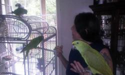 Hi my name is Jeannie if you have a bird or birds that need a forever and loving home please contact me. i have posted some of the birds i have THESE BIRDS ARE NOT FOR SELL OR TRADE.please contact me with any concerns or questions you may have. please