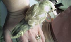 New Bird Play Gym for med to large parrots, never been used. Must pick up. Please email for more information.
