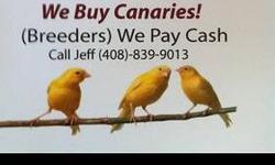 Please no calls until 9:00 am and after 7:00 pm. White Zerbra's-- $7.00 each Penquin Zerbra--$10.00 each Button Quail 2@ $5.00 English Zerbra $10.00 each I WILL TRADE MY BIRDS IF YOU WANT SOME NEW BLOODLINES AND HAVE FINCHES-Looking for new bloodlines for