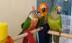 Due to un avoidable circumstances, I have to sell all my personal birds.a lot of good and proven pairs.personally kept.some bonded. I kept them in top shape and with lots of care.i paid top dollars for them just to have what every breeder would wish for