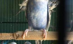 Really good prices on exotic birds! Lowest prices in town ... Call 619-677-3269