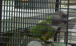 1 pair yellow parrotlets, proven, $175.00 1 pair parrotlets, female turq/male blue, proven, $175.00 1 pair parrotlets, female albino/male green/lutino, proven, $175.00 1 pair green parrotlets, proven, $100.00 1 pair rosie bourkes, proven, dna'd, 150.00