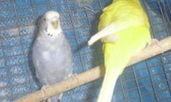 I have some cockatiels, lovebirds, and canaries for sale. cockatiels and lovebirds are parent raised. some are hand tame. No cage is included. Prices start at $40.00 per birds. e-mail if interested and I can sen pictures.