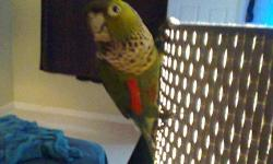 i have a few black mask lovebirds. Some are yellow chest and others are orange. i am asking $35 for a re-homing fee. for more infor please call or text (623)329-5425. #lovebirds,cages,birds