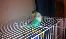 I have 1 hand feed black mask love bird tamed and love to with children. i have a white breeding cage with nest boxes. good for breeding small birds thank you