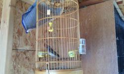 Male black throat canary Verry good sing Please call 714 553 3463 Thank you.