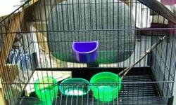 2 YEAR OLD BIRD CAGE----25H23W16D 2 HIGH CLASS FEEDER/WATER DISHES- 1 SNACK DISH 1 BATH DISH 2 GREAT TREE STYLE PERCH 1 NEW CORNER SHELF PERCH ALL GREAT CONDITION ALSO MAPLE WOOD STAND ON WHEELS WITH SHELF FOR SUPPLIES $90.00 WILL SELL BOTH $150 BOTH FOR