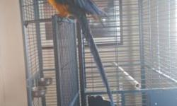 3 year old blue and gold Macaw. Very friendly with my husband. I don't handle him, only because I am scared to. He talks and is a amusing bird. Comes with huge cage. Open also to possible trades. Call or text 989-254-4161