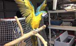 Oscar is a very friendly bird, who loves to talk, dance and be around people. He needs a good family to look after him because I am no longer able. Please contact me at 908-229-5973. Oscar will come with his own cage and toys. Price is negotiable.