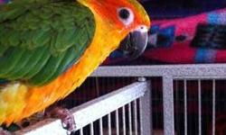 BooBoo- Blue crown conure 6 years old Please contact me for more information and to discuss a price. Thanks.